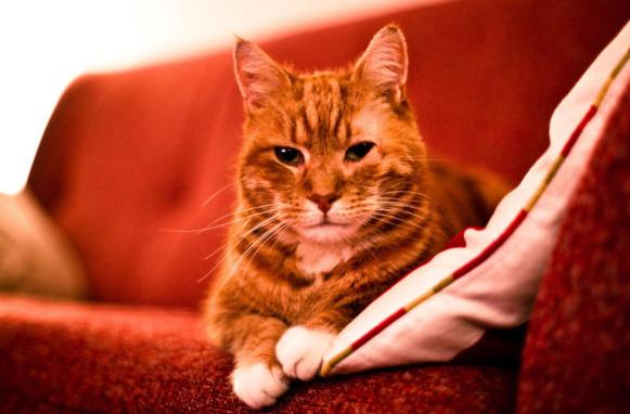 Как мы срочно диван с котом продавали