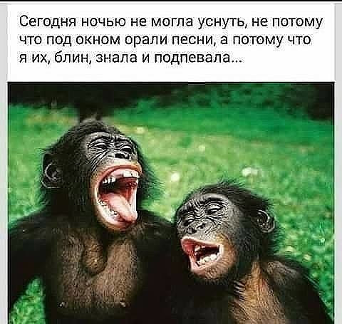 Лучшие анекдоты на каждый день